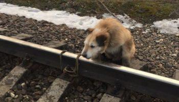 Электричка летела навстречу псу, а тот не мог убежать
