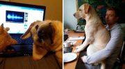 25 забавных собачек, которые плевали на ваше личное пространство