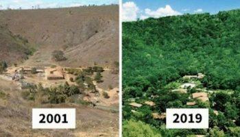 Семейная пара высадила за 20 лет 2 миллиона деревьев