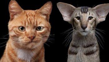 Фотограф, который умеет снимать портреты котов, подчеркивающие их личность
