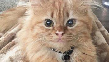 Эту кошку называют «кошачьей Моной Лизой» из-за ее постоянной загадочной улыбки