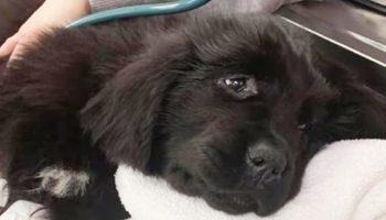 Собака была обречена на эвтаназию, но добрые люди решили бороться за жизнь бедняжки