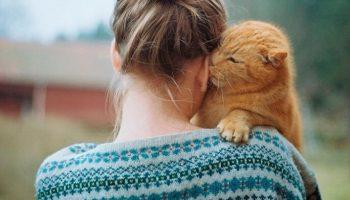 Союз кошки и человека. Какие болезни лечат усатые «доктора»