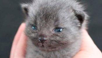 Милая история о котенке, который вряд ли бы выжил без помощи этой девушки