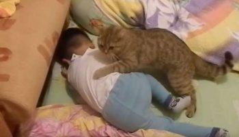 Очень милое видео: домашний кот помог успокоить расплакавшегося малыша
