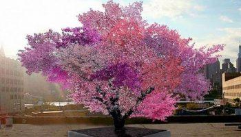 В Америке растёт дерево-гибрид с 40 видами фруктов