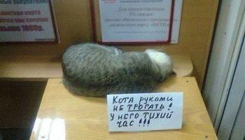 Ну как можно не любить котов?