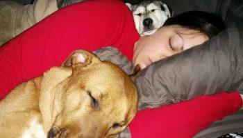 Эти фото, доказывают, что собака — лучший друг человека