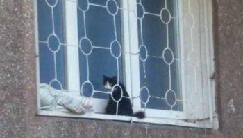 Рождение ребенка, стало поводом выбросить беременную кошку на улицу. Мурка сидела на подоконнике 2 недели и ждала, когда ей откроют