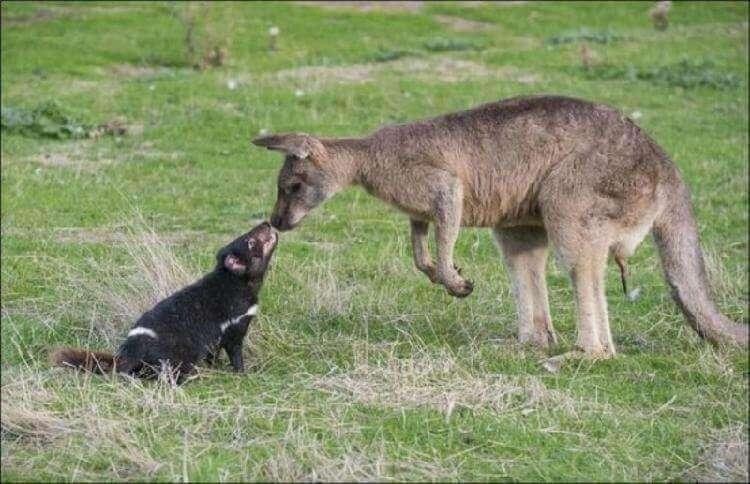 Кадры необычной дружбы среди животных