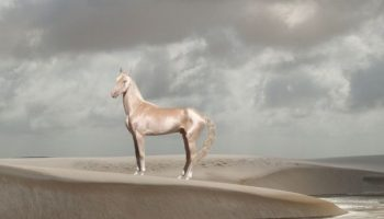 Изабелловая лошадь — удивительное создание, считающееся редчайшими в мире
