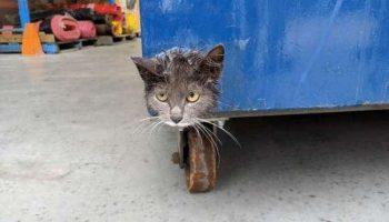 Мордочка кота выглядывала из мусорного бака с огромными от страха глазами