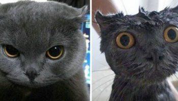 Оскорблённые до глубины души: 8 котов, которых помыли. ФОТО