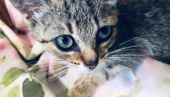 Женщина решила приютить котенка, которого игнорировали все прохожие