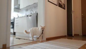 Как наши любимые котики переживают одиночество