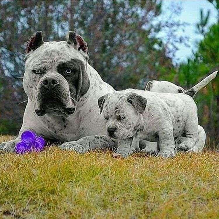 Самые необычные собаки фото