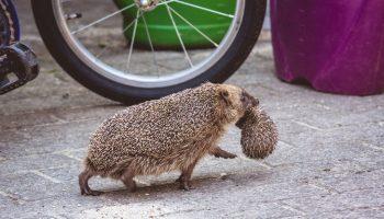 12 очень неожиданных фактов о животных