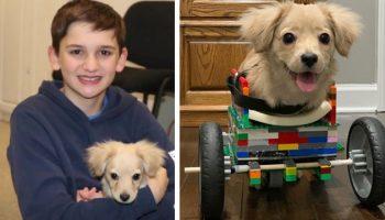 12-летний мальчик изготовил из конструктора Лего инвалидную коляску для щенка, который родился инвалидом…