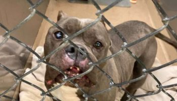 Старый пес жил на улице около 10 лет. Его забрали в приюте, но, кажется, он потерял надежду на лучшую жизнь