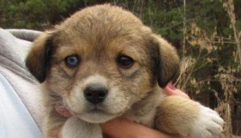 Новорожденных щенков положили в коробку и унесли подальше в лес