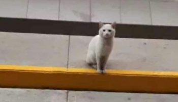 Этот беленький котик каждый день приходил к магазину и садился у входа. Он чего-то ждал!