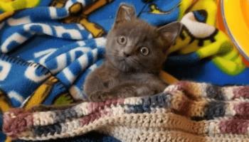 История маленького котенка по кличке Овес, которого защемило дверью