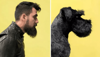 Фотографии доказывающие, что собаки похожи на своих владельцев