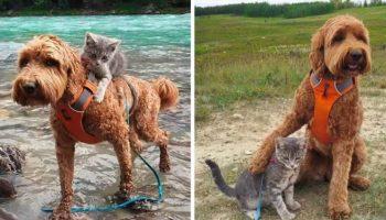 Очаровательная история про котенка, который нашел свою собаку и пошел за ней… Дружба с первого взгляда!