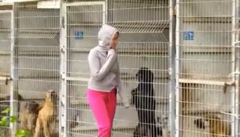 Женщина пришла в приют и не смогла выбрать, какую собаку усыновить, поэтому купила весь