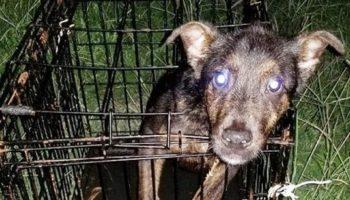 Измученная собака сидела в закрытой клетке, а рядом лежала записка