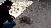 Собака расплакалась, увидев своих спасителей. Она была полностью обездвижена и не могла даже подняться на лапы