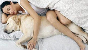 7 очень важных причин, почему ваша собака должна спать с вами в кровати