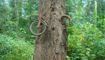 В 1914 году молодой человек ушел в армию и спрятал велосипед в лесу