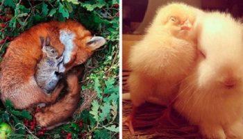 Невероятная дружба животных, в которую трудно поверить, пока сам не увидишь