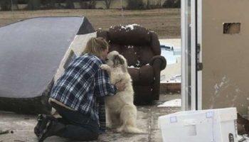 Семья была вынуждена оставить собаку дома за мгновение до торнадо