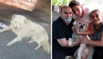 Своего пропавшего пса, семья встретила совершенно в другом городе