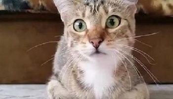 Кот смотрел с хозяйкой фильм ужасов и стал звездой Интернета.