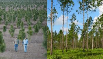 Этот мужчина высадил 8 миллионов деревьев, чтобы восстановить лес, который вырубили еще в 30-х годах