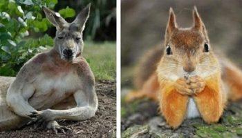 Эти животные могли бы работать топ-моделями