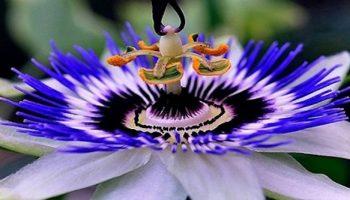 Узнай, какой цветок ваш талисман, соответствующий имени
