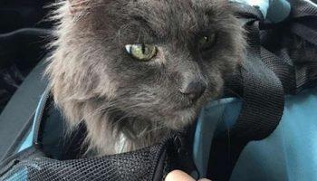 Старого кота сдали в приют. Расстроенный 20-летний кот сидел очень тихо и не знал, что будет дальше