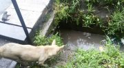 Мама-собака позвала прохожих на помощь, когда ее щенков затопило водой