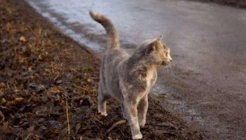 Кошка Пуша бросала своих новорожденных котят и убегала в лес
