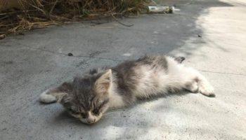 Почти слепого котёночка, подобрала на улице девушка и тем самым, спасла ему жизнь