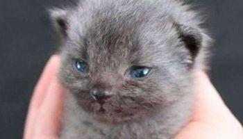 Женщина спасла маленького серенького котенка, но цвет его шерсти начал меняться