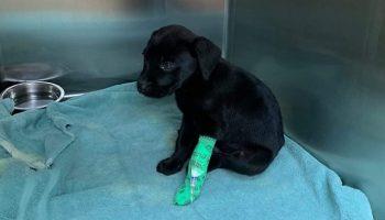 Глухой парень приютил глухого щенка, которого никто не хотел брать из приюта
