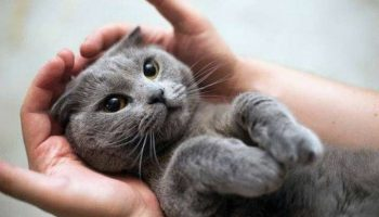 5 научно доказанных фактов о том, что кошки продлевают человеку жизнь