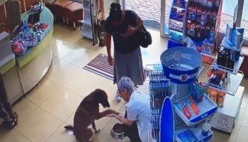 Бродячий пес спокойно зашел в аптеку и попросил фармацевта о помощи