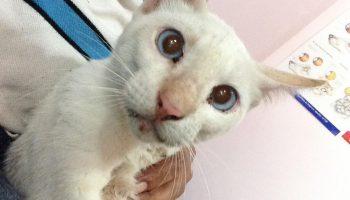 Белоснежное существо с огромными синими глазами… наполнились слезами! Раненный кот застрял среди машин, но в одной из них сидели не динозавры…