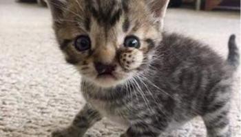 Котёнка с тремя щёчками оставили возле ветклиники и уехали… Но бедняга так хочет быть кому-то нужным!